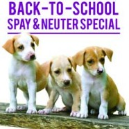 Back to School $10 Spay/Neuter Special