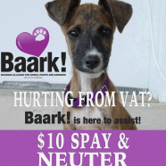 $10 Dog Spay and Neuter Offer During May