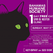 FREE Cat Spay and Neuter Clinic – One Day Only